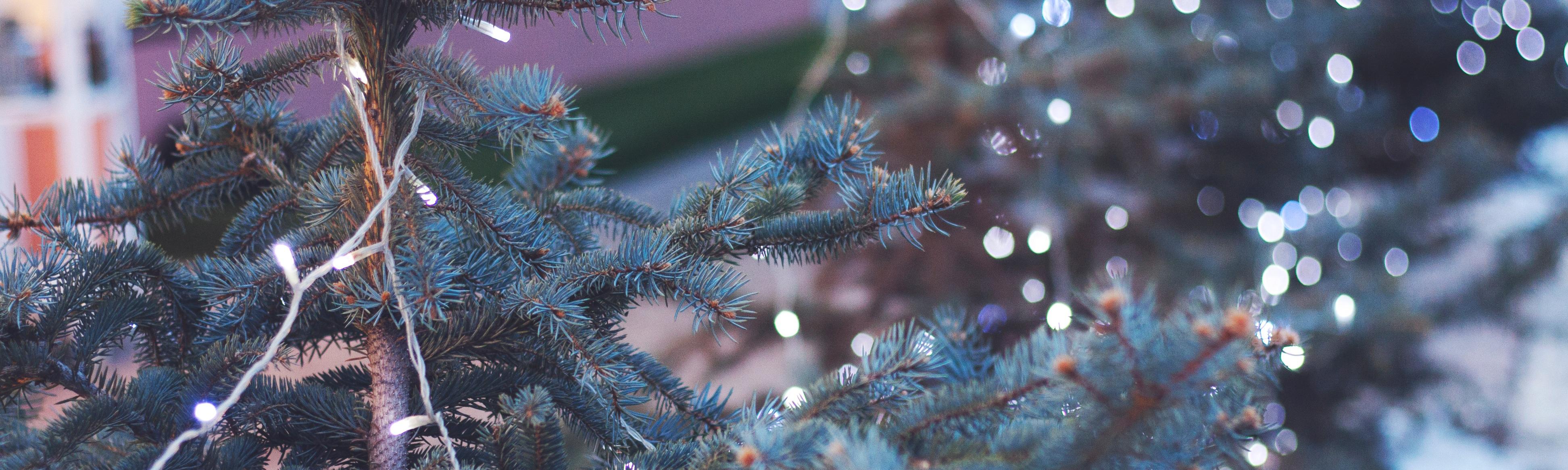 kerstmarkten kerstboom