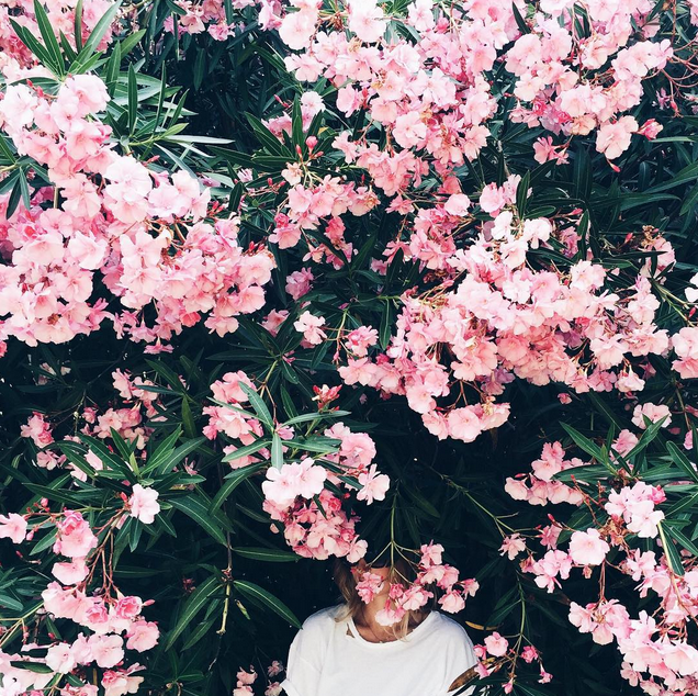 Flowers Mija Mija