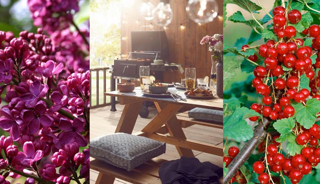 leuke bloemen en decoratie voor in de tuin in juni
