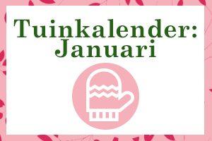 Januari thumbnail