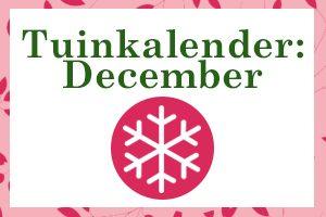 Thumbnail december