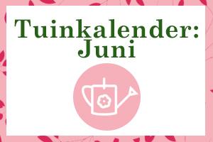 Thumbnail juni