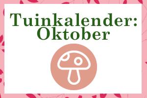 Thumbnail oktober