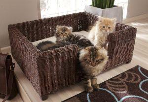 kat huisdier