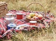 Picknicken: Wat moet je meenemen in je picknickmand?